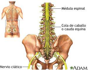 Medula espinal 3